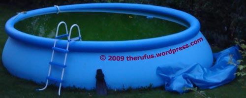 Blauer Pool ganz grün